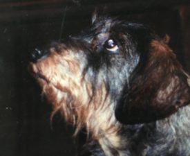 Wenn Gott einen Hund misst,  zieht er ein Band um das Herz statt um den Kopf.